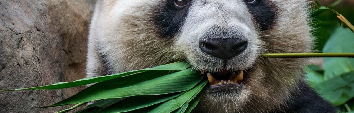 Bitpandas eigene Währung: BEST-Token